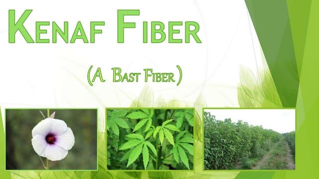 Kenaf fiber(Bast fiber)