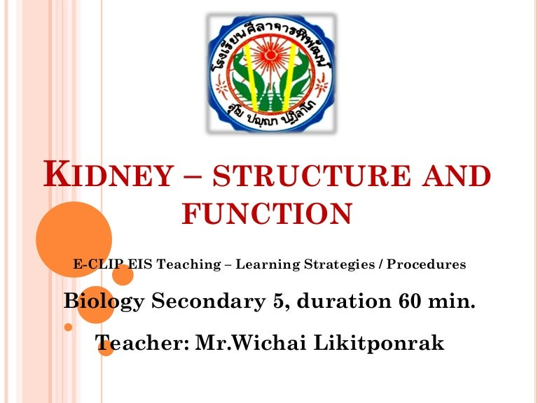 Kidney Structure And Function Mee