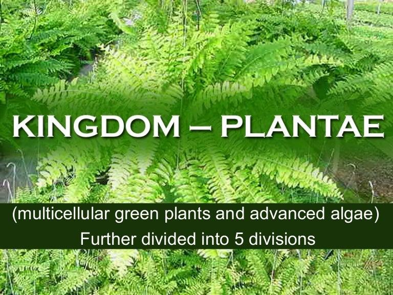 Image result for kingdom Plantae