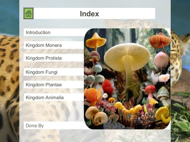 animal kingdom classification for class 11