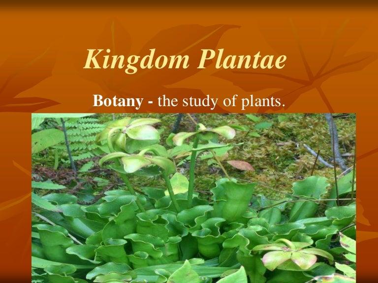 Kingdomplantae 131111094609 Phpapp Jpgcb1384163337