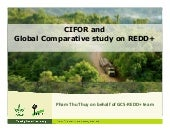 CIFOR and Global Comparative Study on REDD+
