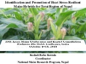 Heat Stress Resilient Maize Hybrids for Terai Region of Nepal
