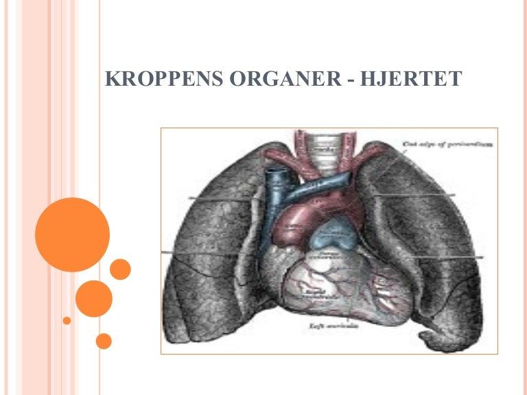Organer kroppens Sådan arbejder
