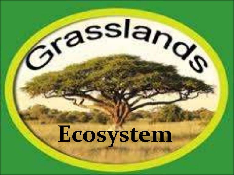 grassland ecosystem