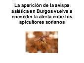 La aparición de la avispa asiática en burgos