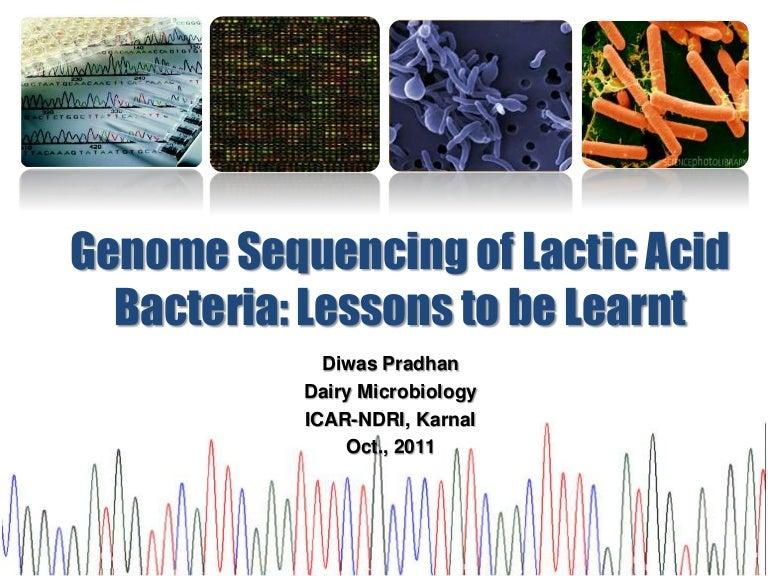 Lactic acid bacteria whole genome sequencing  Lactic acid bac...