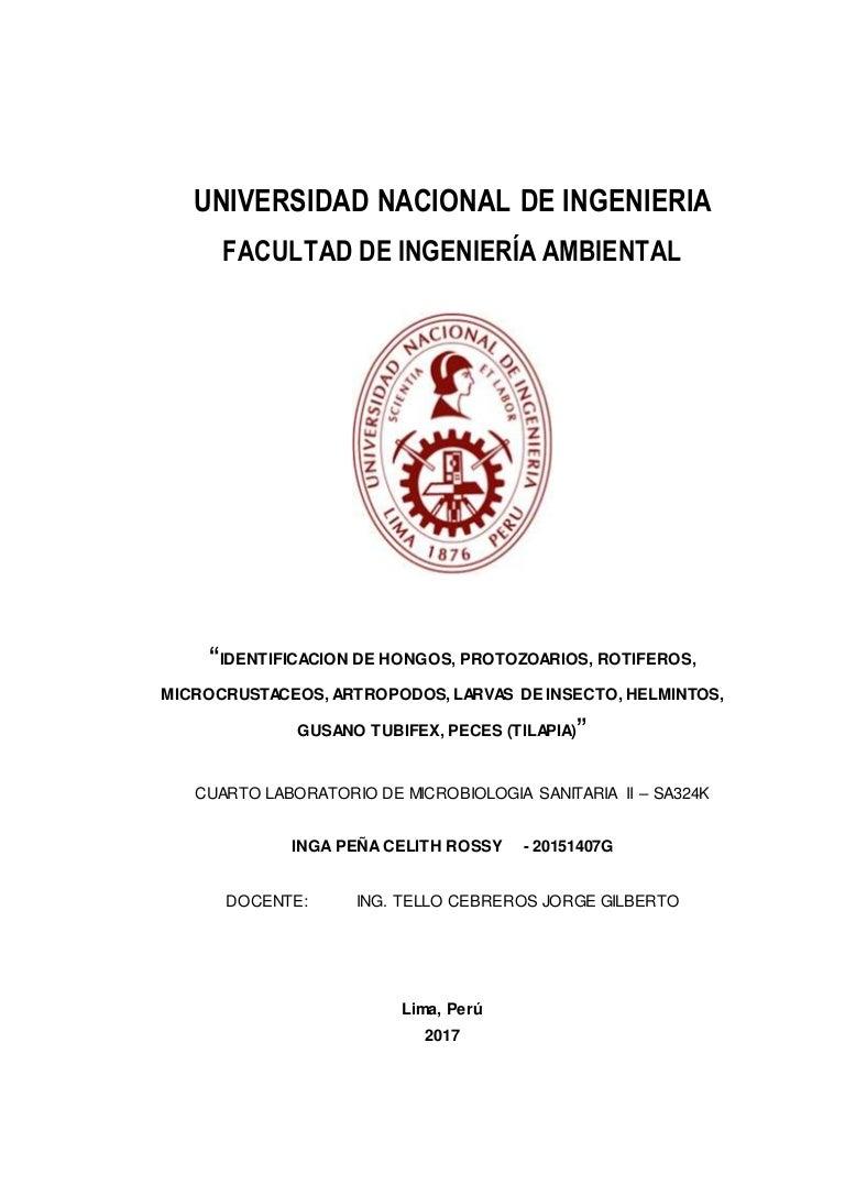 Contemporáneo Anatomía Interna Lombriz De Tierra Bosquejo - Anatomía ...