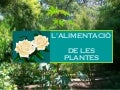 L'alimentació de les plantes power point