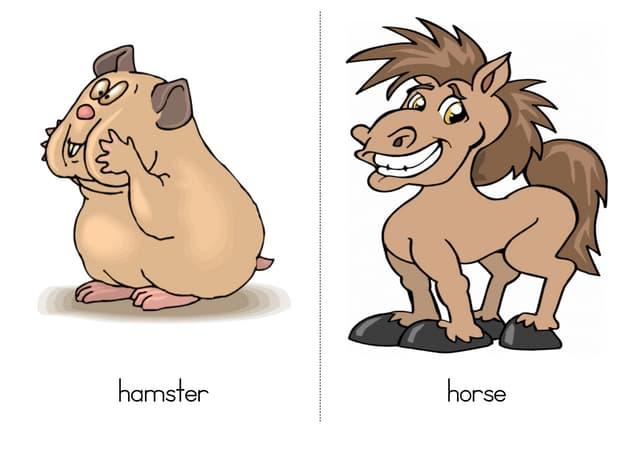 Large animals2-words