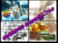 Las empresas según el sector económico
