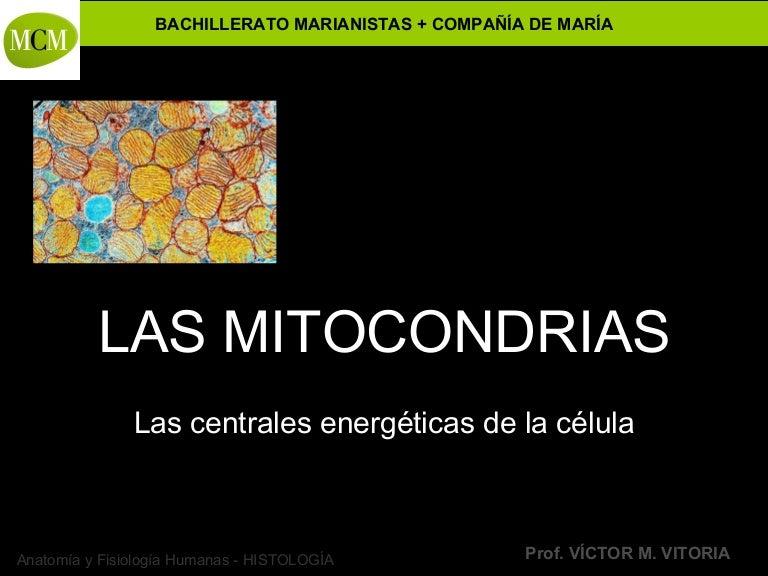 Las Mitocondrias Mcmc