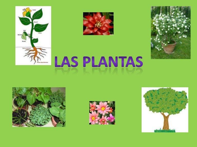 Las plantas power point for Las raices chinas se cocinan