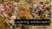 Layering wildscapes: designing with plant communities
