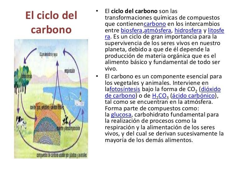 Ciclo Del Carbono Para Dibujar