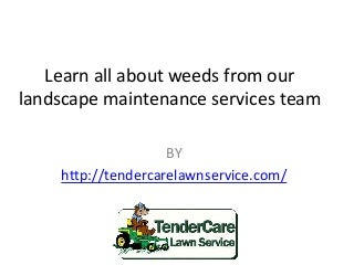 Learn all about weeds from our landscape maintenance services team