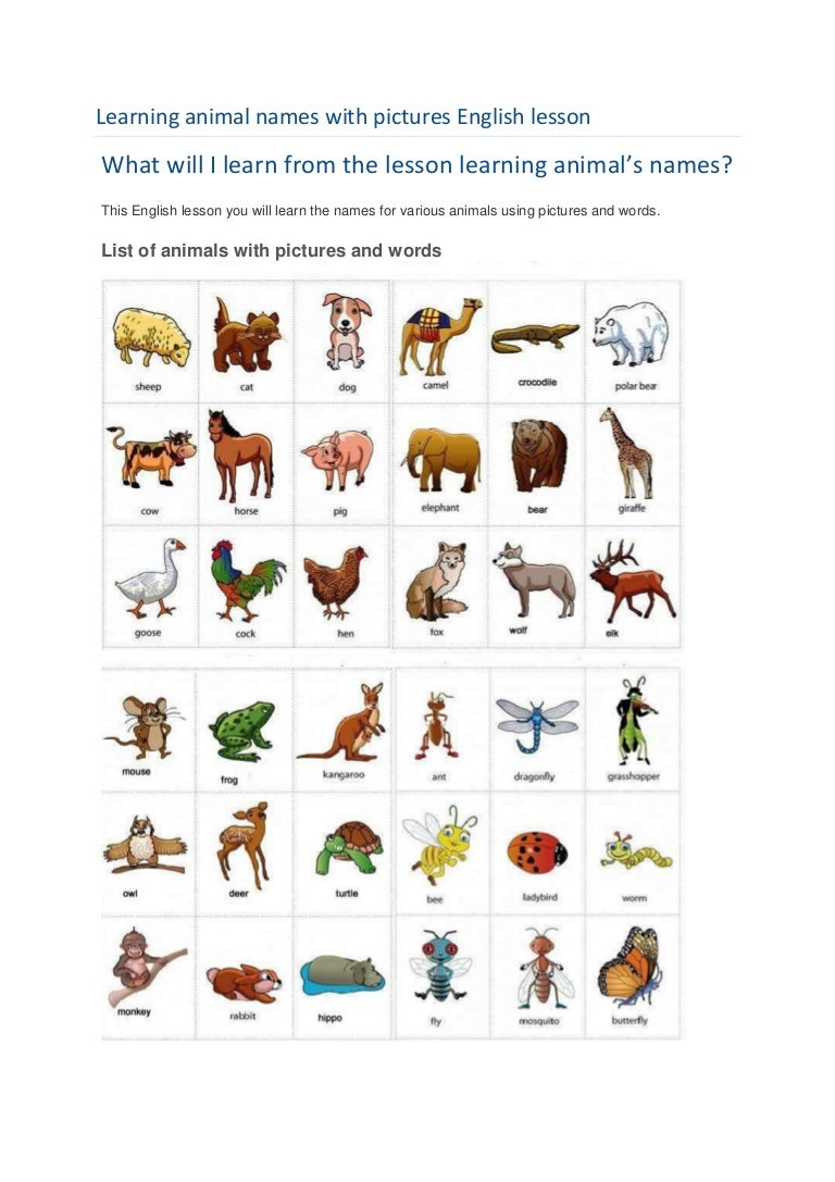 Learning animal names with pictures english lesson - photo#19