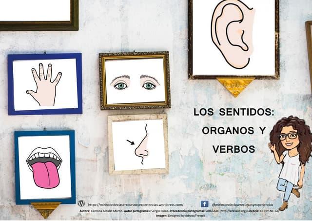 LOS SENTIDOS: ÓRGANOS Y VERBOS ASOCIADOS. LECTURA DE PALABRAS