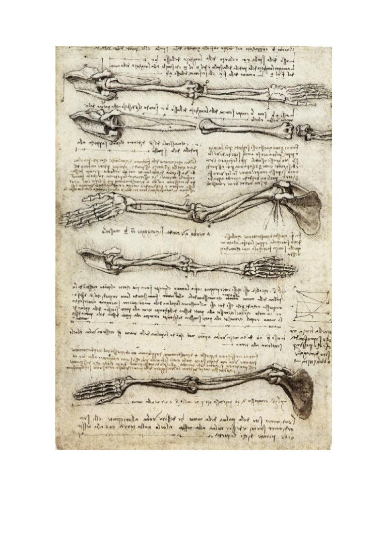 Leonardo da vinci human anatomy drawings