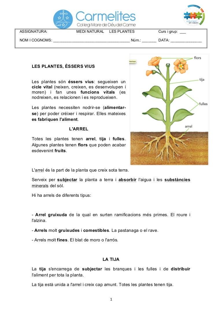 Les plantes didakids for Les plantes