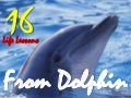 Lessons from dolphin
