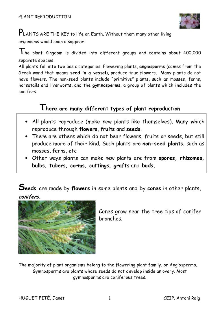 Worksheet Plant Reproduction Worksheet Worksheet Fun Worksheet