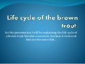 Life cycle of the brown trout zach