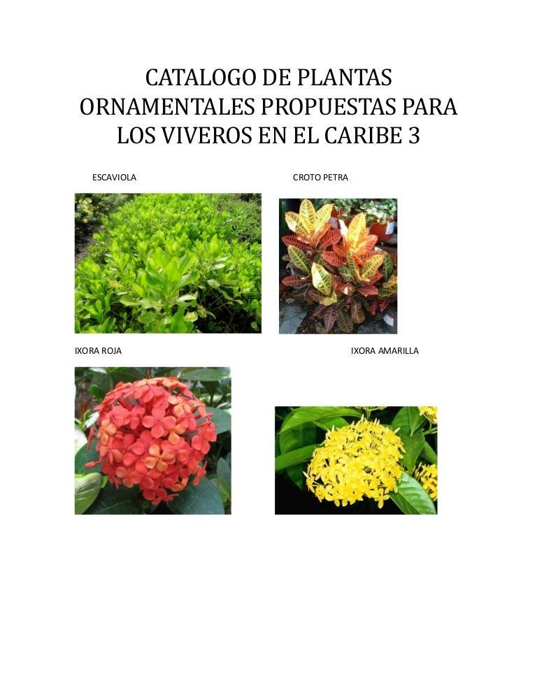 Listado de plantas con fotos for 10 plantas ornamentales