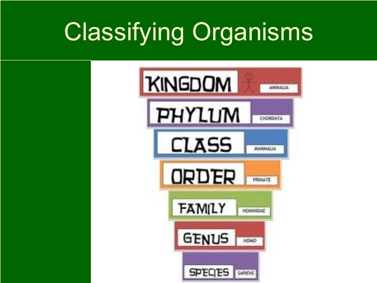 Image result for how to classify living things