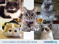 Cats rule the internet - Social Media Dames Fall 2014