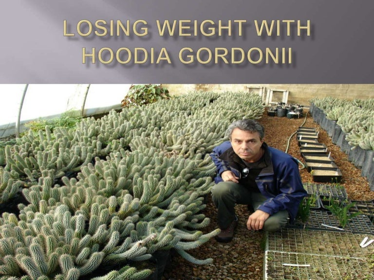 Losing Weight With Hoodia Gordonii