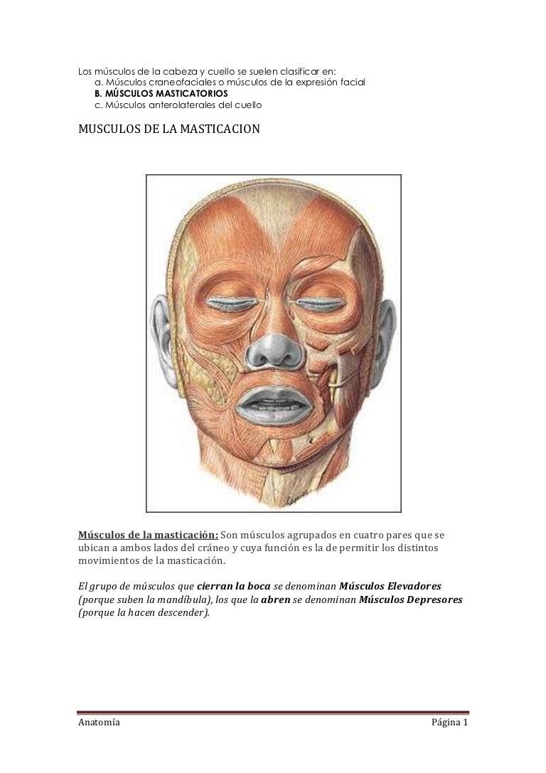 Los músculos de la cabeza y cuello