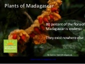 The endemic plants of Madagascar