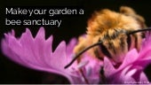 Make your garden a bee sanctuary
