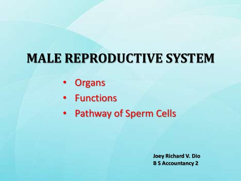 Reproductive system of insects.