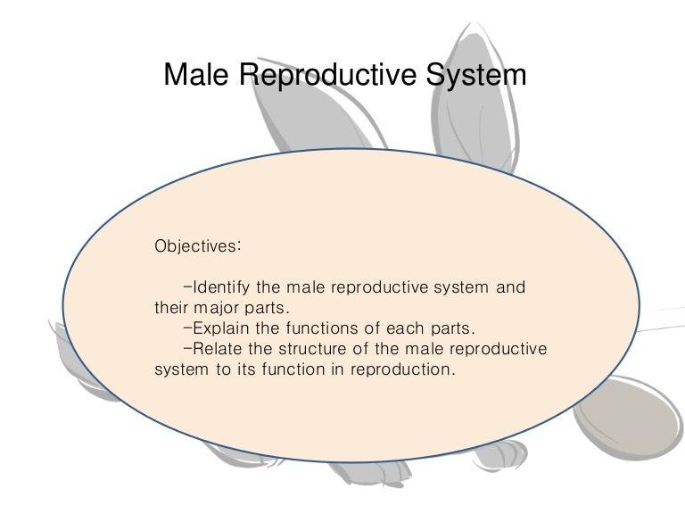 malereproductivesystem-150610083429-lva1-app6891-thumbnail-4.jpg?cb=1433925415