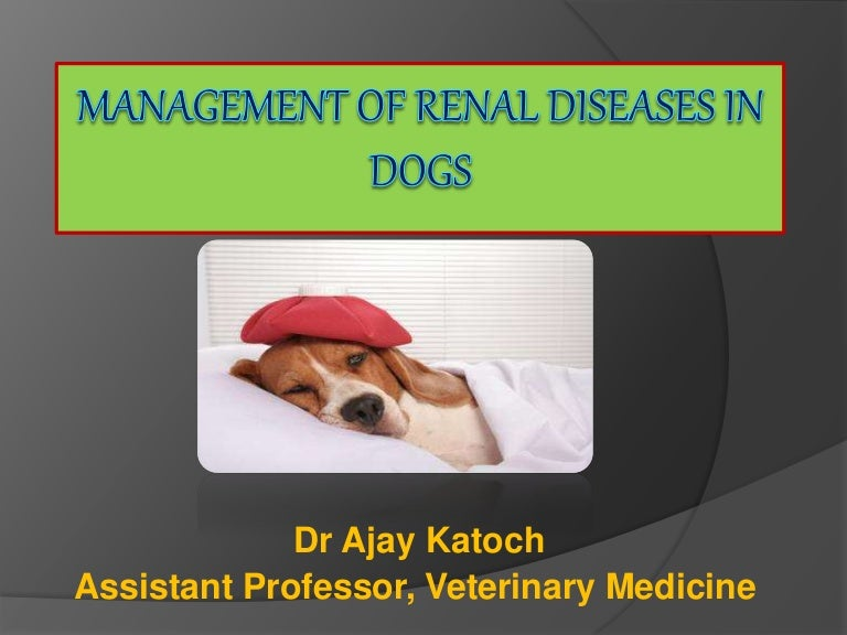 Management Of Renal Disease In Dog