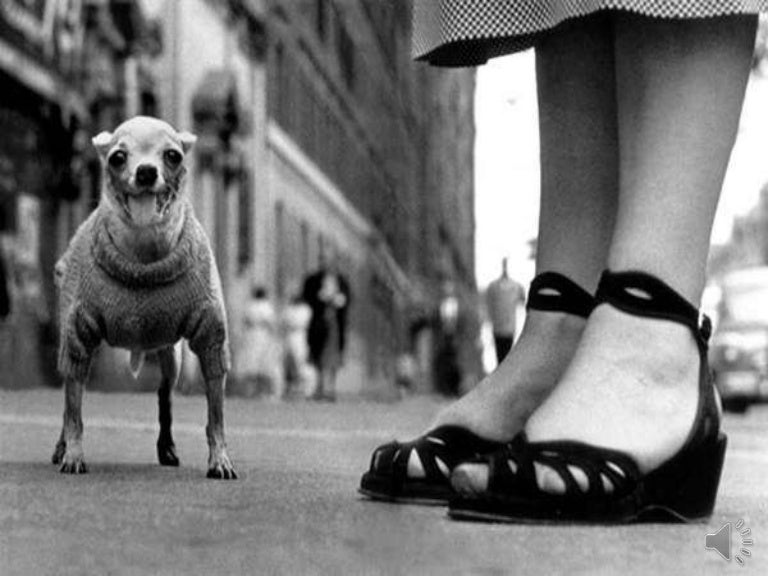 Master Photographer Elliot Erwitt