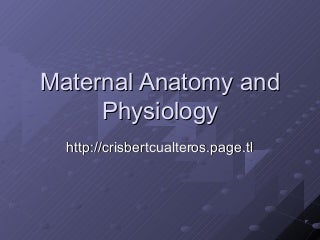 Maternal Anatomy And Physiology