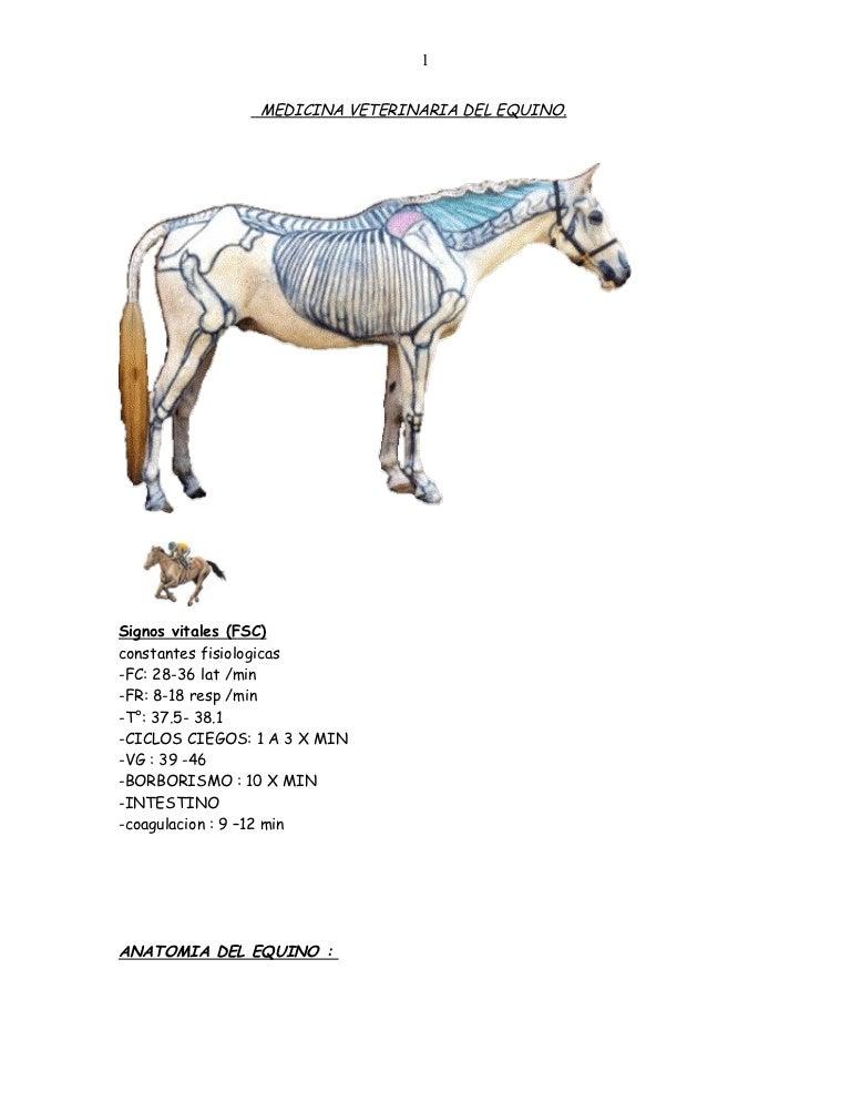 Medicina veterinaria-del-equino-grande