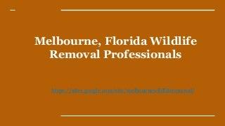 Melbourne, FL Wildlife Removal Company