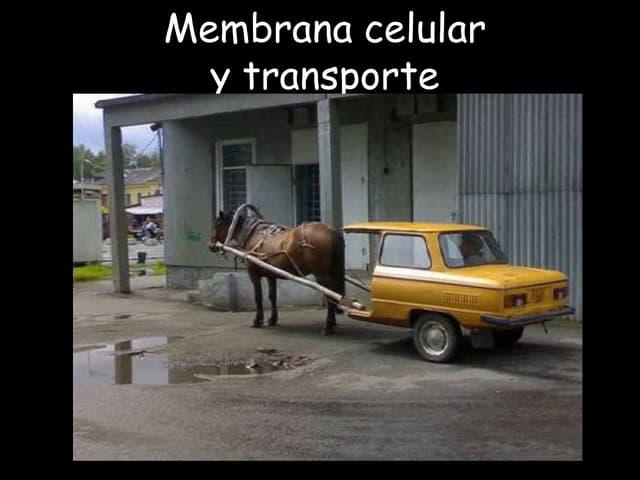 Membrana celular y transporte