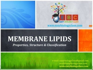 Membrane Lipids: Properties, Structure and Classification by easybiologyclass
