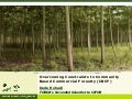 Overcoming Constraints to Community Based Commercial Forestry (CBCF)