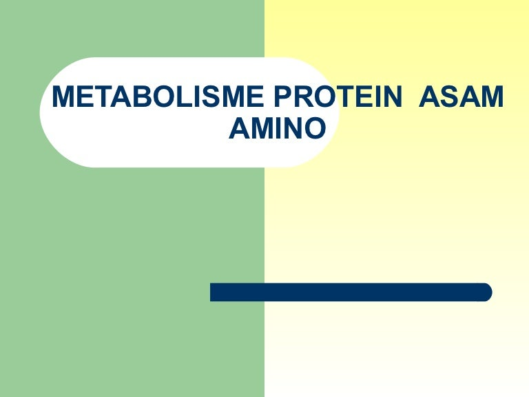 258221206 3 metabolisme protein ppt.