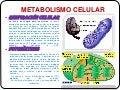 Metabolismo celular malena.cta
