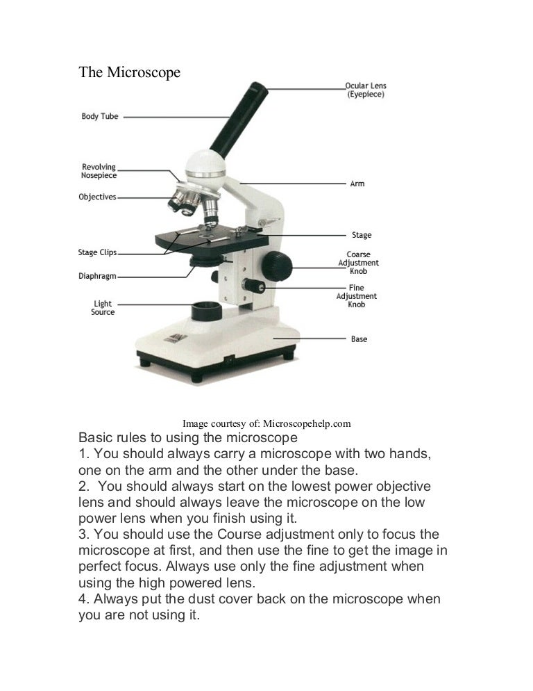 Microscope labeled diagram – Microscope Quiz Worksheet