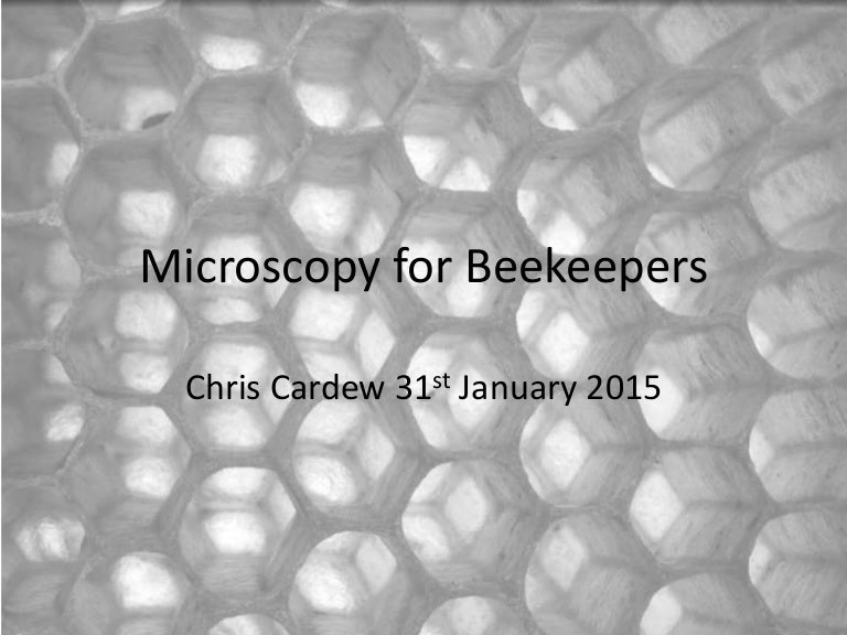 Bee wings under microscope 40x gallery diagram writing sample microscopy for beekeepers sciox gallery sciox Image collections