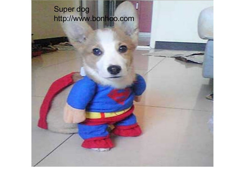 Super Dogs In Costumes