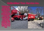 Millersville Tree Trimming Company